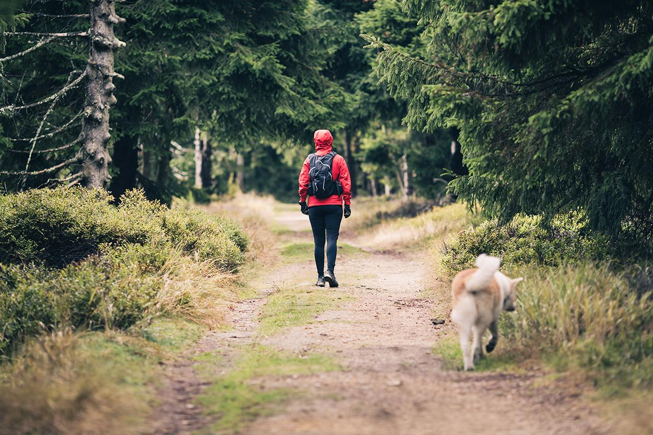 Woman hiking with akita inu dog on forest trail. Recreation and healthy lifestyle outdoors, autumn woods in mountains, inspirational nature. Fitness and trekking and activity concept.